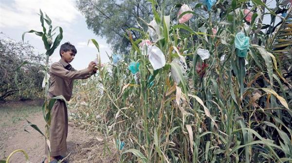 مليشيا الحوثي تدمّر قطاع الزراعة في اليمن