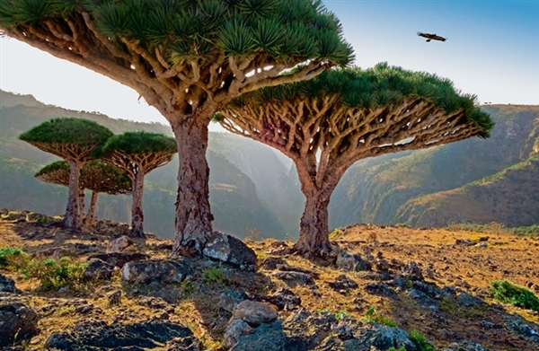 Yemeni official: Military forms threaten Socotra