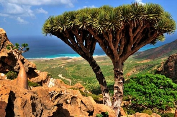 Gov't reports STC's sabotage in Socotra to UNESCO